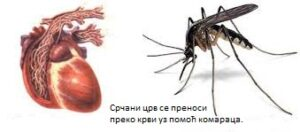 СРЧАНИ ЦРВ Ветеринарска Амбуланта ГУТА